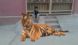 تطبيق الحيوانات كاميرا